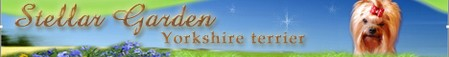 Stellar Garden Yorkshire terrier